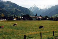 Австрийский пейзаж. Май 2003 г. Курорт Целль-ам-Зее - Капрун / Австрия.