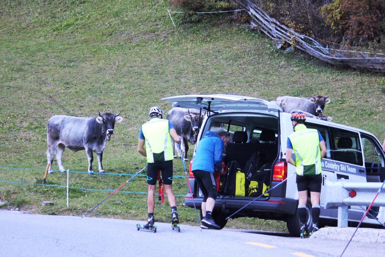 Небольшая передышка перед следующей серией ускорений. И как всегда любопытные альпийские коровы рядом.